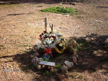 Arbre de Jaume Serra Cardell, mestre socialista, assassinat pels feixistes el 1937 al Fortí d'Illetes, als 23 anys, acusat d'executar «actes de resistència»